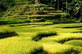 Eloknya Kampung Gelar Kubang di Selatan Kota Cianjur