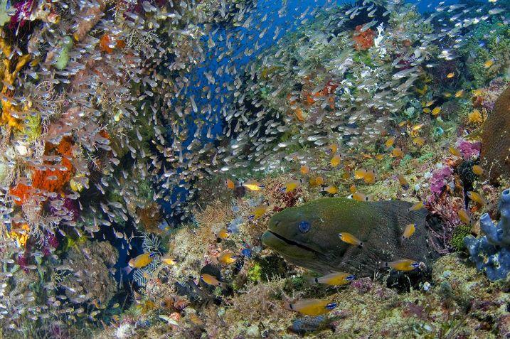 Wisata-Wisata Terbaik Untuk Menikmati Pesona Pulau Waigeo Raja Ampat