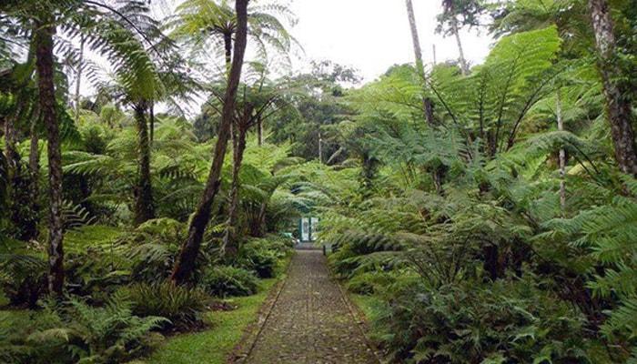 Harga Tiket Masuk, Jam Buka Kebun Raya Cibodas 2020