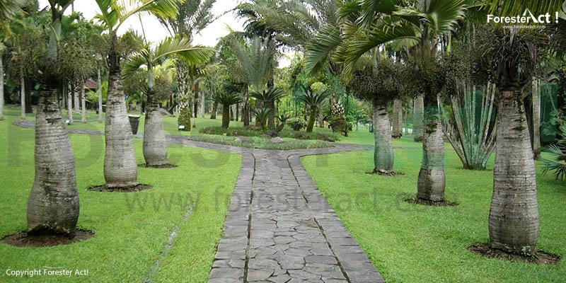Taman Palem Taman Bunga Nusantara cianjur