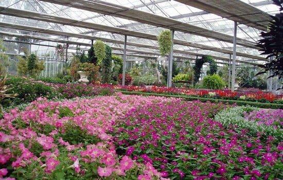 rumah kaca taman bunga nusantara