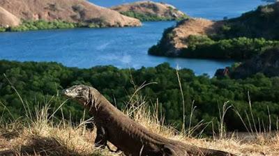 Pulau Komodo, Nusa Tenggara